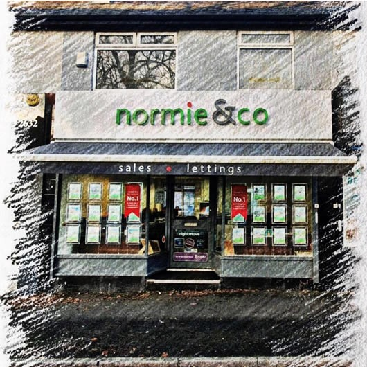 About Normie & Co